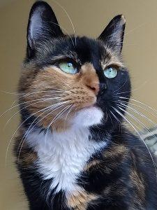 Cat Sitting Raleigh North Carolina