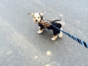 Dog Walking Raleigh